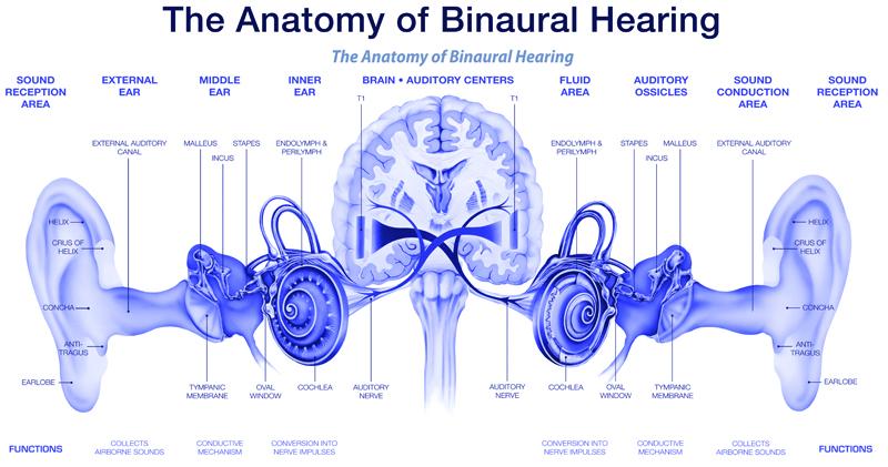 Binaural Hearing - how hearing works